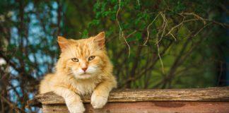Alte Katze lieg auf einer Bank