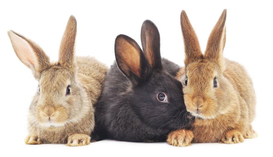 Bild mit drei süßen Kaninchen