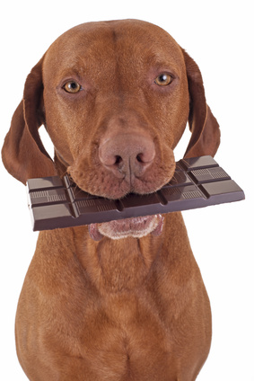 Can A Dog Die From Eating Chocolate Cake