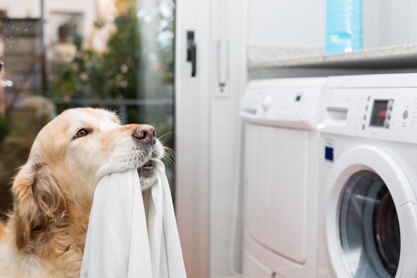 Sauberkeitserziehung bei Hunden und Welpen