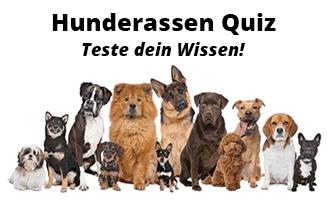 hunderassen-quiz