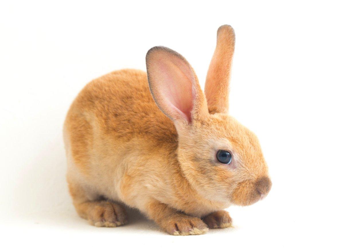 Seitenansicht von jungem Kaninchen