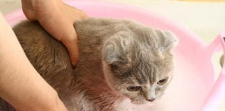 Katze wird gebadet