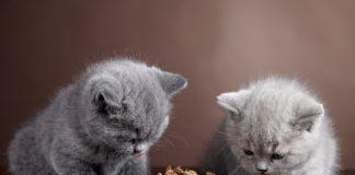 Zwei Katzen fressen nicht