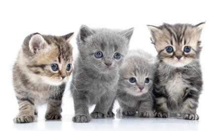 Gruppe von jungen Katzen