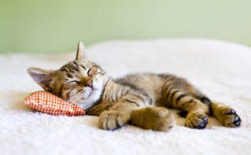 Katzenbaby beim Schlafen